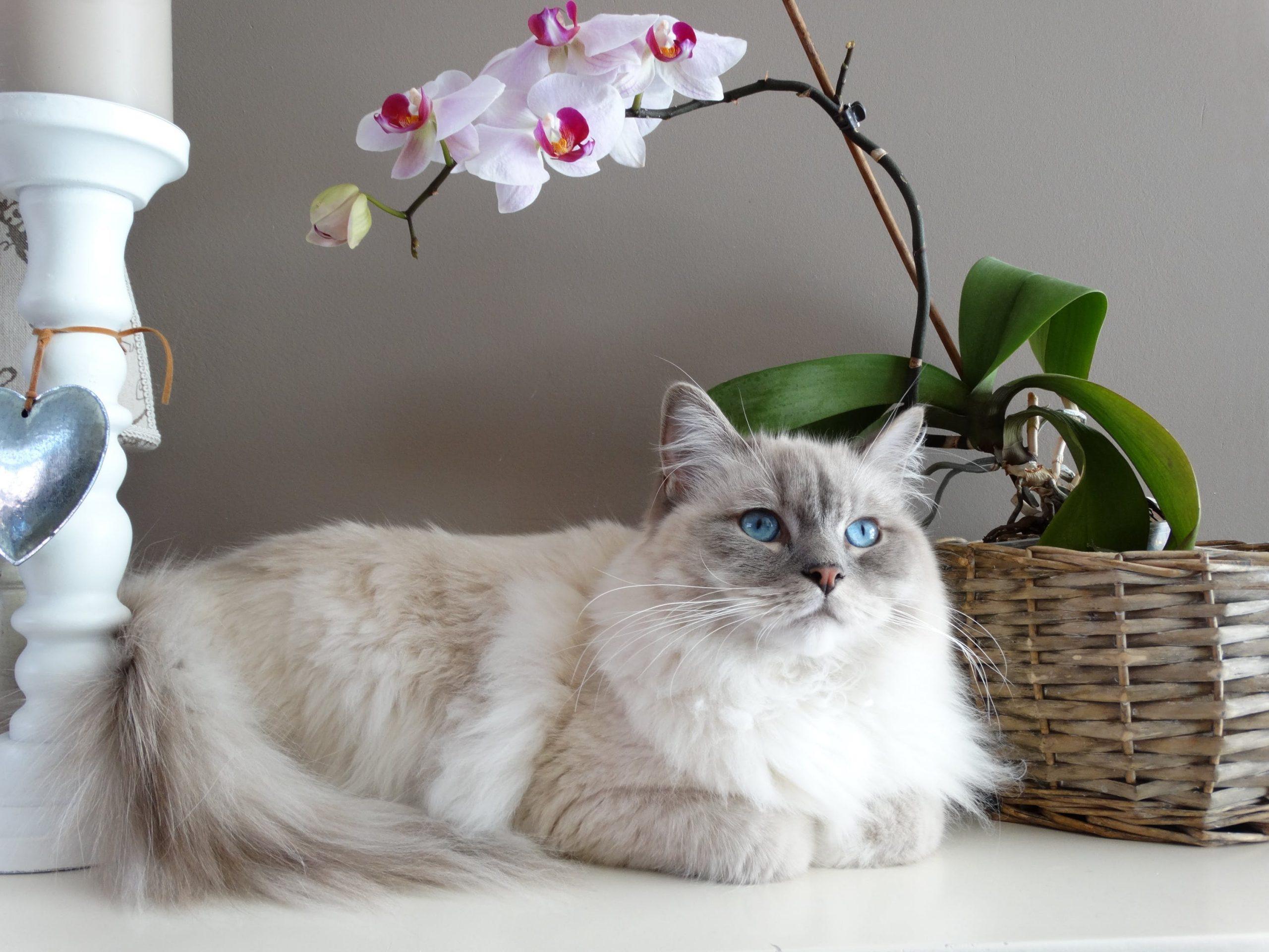5 Alasan Mengapa Kucing Anda Harus Makan Pro Plan Wet